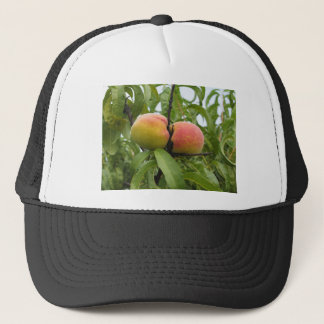 Red peaches hanging on the tree . Tuscany, Italy Trucker Hat