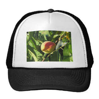 Red peaches on tree branches in a cultivated land cap