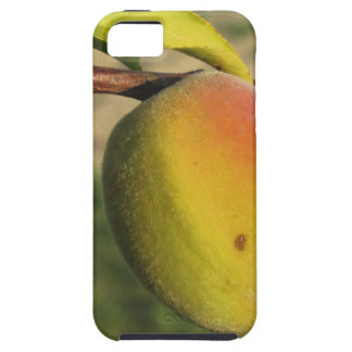 Red peaches on tree branches in a cultivated land case for the iPhone 5