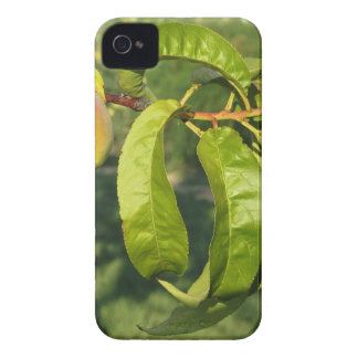Red peaches on tree branches in a cultivated land Case-Mate iPhone 4 cases
