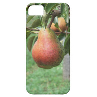 Red pears hanging on the tree . Tuscany, Italy iPhone 5 Cover
