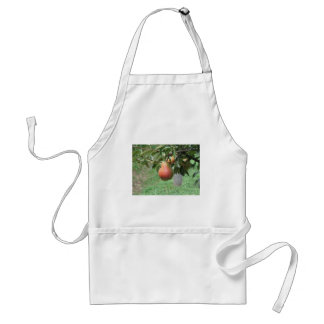 Red pears hanging on the tree . Tuscany, Italy Standard Apron