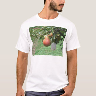 Red pears hanging on the tree . Tuscany, Italy T-Shirt
