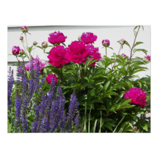 Red Peonies and Purple Flowers Photograph Poster