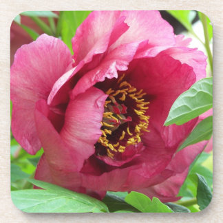 Red Peony Floral Coaster Set