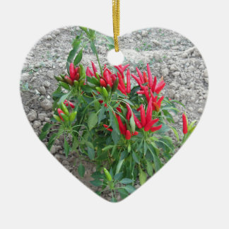 Red peppers hanging on the plant ceramic heart decoration