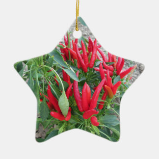 Red peppers hanging on the plant ceramic star decoration