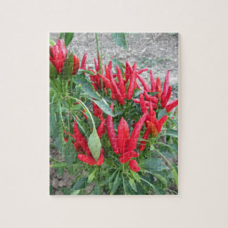 Red peppers hanging on the plant jigsaw puzzle