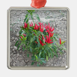 Red peppers hanging on the plant metal ornament