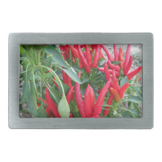 Red peppers hanging on the plant rectangular belt buckles