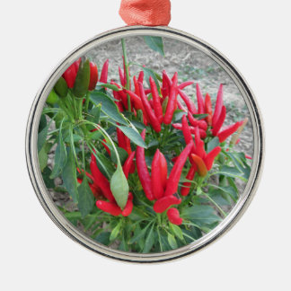 Red peppers hanging on the plant Silver-Colored round decoration