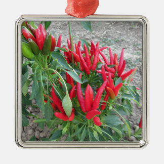 Red peppers hanging on the plant Silver-Colored square decoration