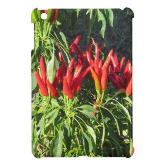 Red peppers hanging on the plant . Tuscany, Italy Case For The iPad Mini