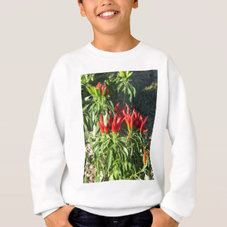 Red peppers hanging on the plant . Tuscany, Italy Sweatshirt