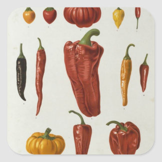 Red peppers square sticker