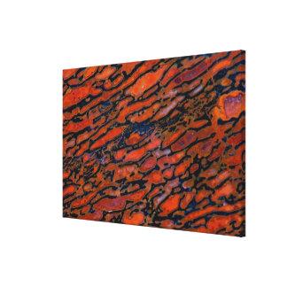 Red Petrified dinosaur bone Canvas Print