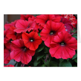 Red petunia flowers card