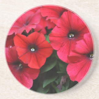 Red petunia flowers coaster