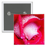 Red/Pink Dew-Kissed Rose Pinback Buttons