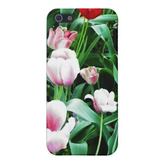 Red & Pink Tulips Pictures iPhone 5 Cases