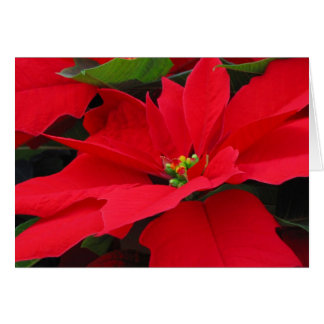 Red Poinsetta Note/Greeting Card 40 2017