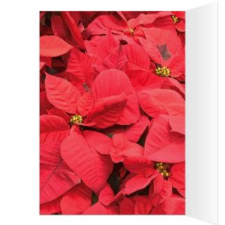 Red  Poinsettia Card