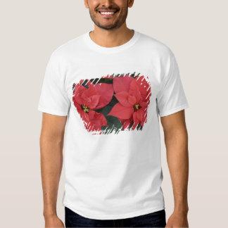 Red Poinsettia Detail (Euphorbia pulcherrima) Shirt