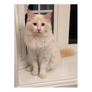 Red Point Ragdoll Cat - Sitting Pretty Postcard
