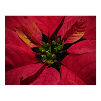 Red Pointsettia Post Card
