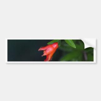 Red pomegranate flower (Punica granatum) on a tree Bumper Sticker