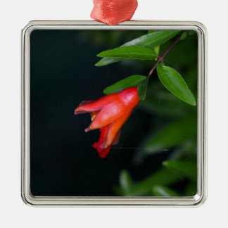 Red pomegranate flower (Punica granatum) on a tree Silver-Colored Square Decoration