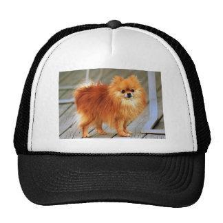 Red Pomeranian Trucker Hat