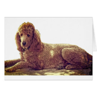 RED POODLE AT REST CARD