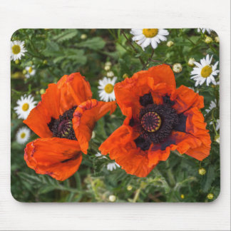 Red poppies and white daisies mousepad