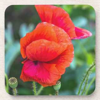 Red poppies hard plastic coasters