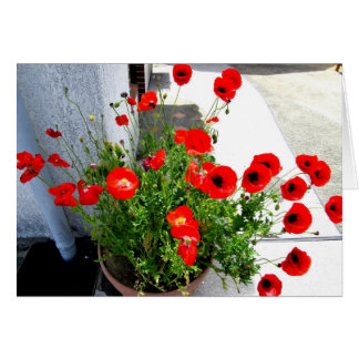 Red Poppies photo greeting card