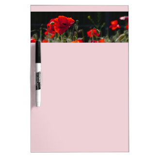 Red Poppies / poppy field  /  Roter Mohn Dry Erase Whiteboard