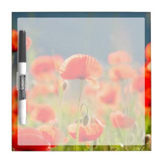 Red Poppies Poppy Flowers Blue Sky Dry-Erase Whiteboards