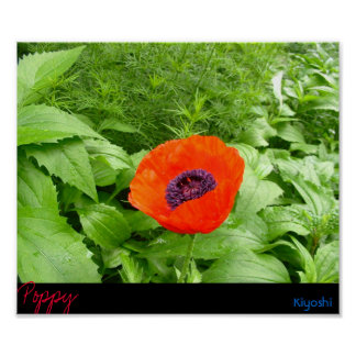 Red Poppy 2 Posters