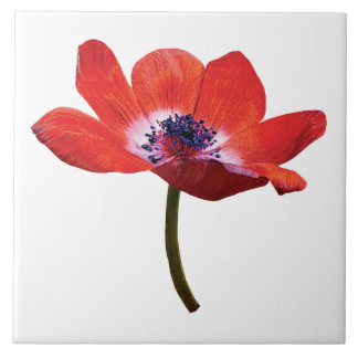 Red Poppy Closeup Large Square Tile