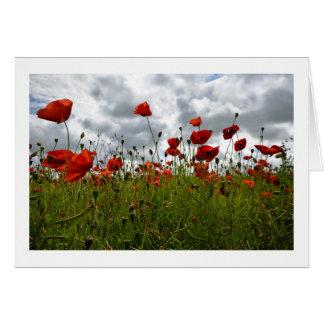 Red Poppy Field, Dorset Greeting Card