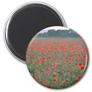 Red Poppy field, Kent, England flowers 6 Cm Round Magnet