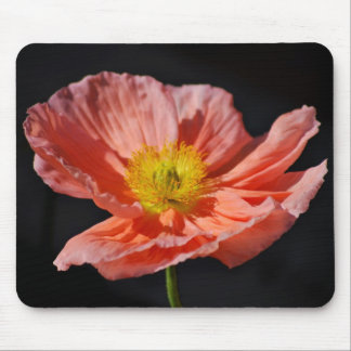 Red poppy flower and meaning mousepads