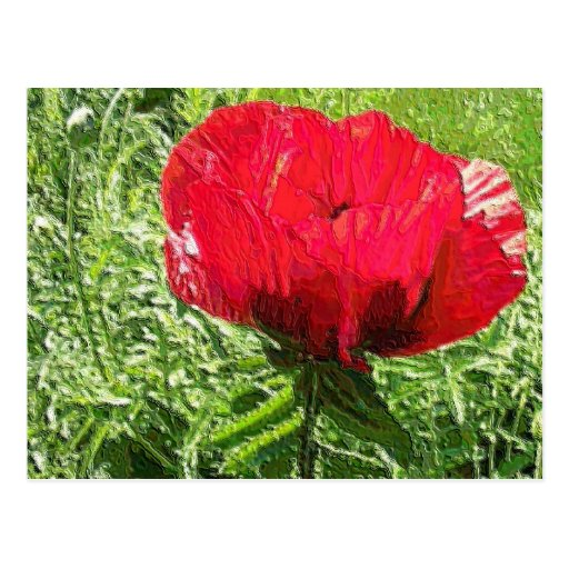 Red Poppy in Soft Plastic Post Cards