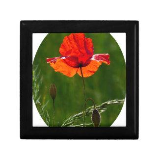 Red poppy in summer 02 gift box