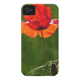 Red poppy in summer 02 iPhone 4 covers