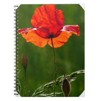 Red poppy in summer 02 notebook