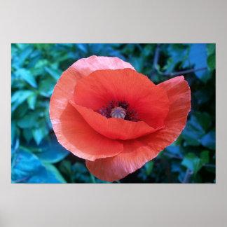 Red Poppy. Poster
