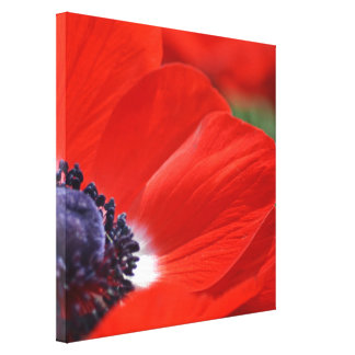 Red Poppy Spring Floral Canvas Prints