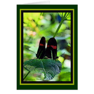 Red Postman: butterfly Card